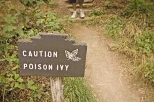 Essential oils can help relieve and treat poison ivy rashes.