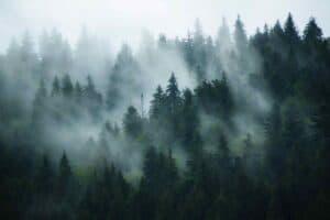 Mist over trees