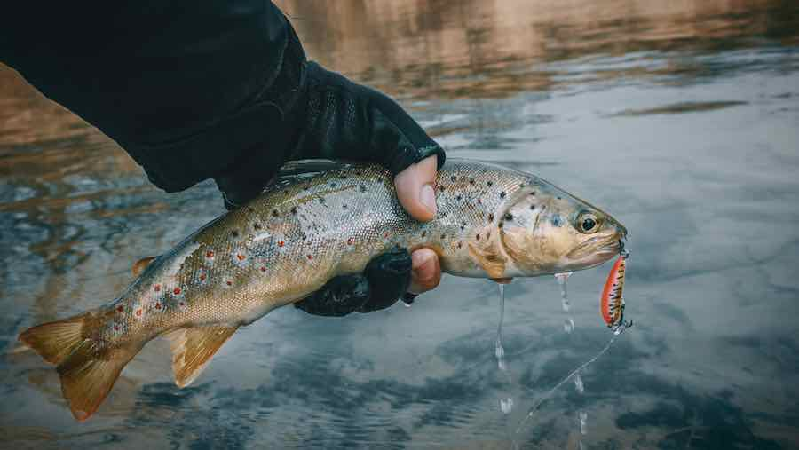 person holding trout